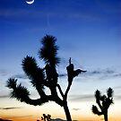 Dessert Sunset by Flux Photography