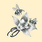 honey bees on wild aquilegia flowers by EllenLambrichts