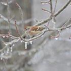 Sparrow on Ice by Lin Miller