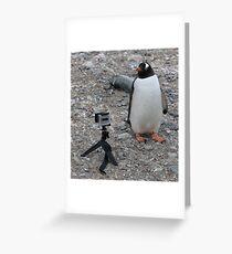 Gentoo Penguin in Antarctica & Go Pro - 5 Greeting Card