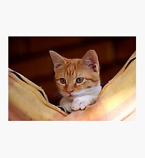 cute little kitty Photographic Print