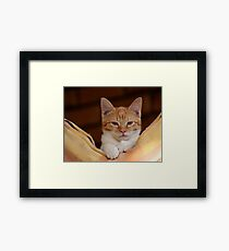 cute ginger cat Framed Print
