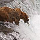 Head Bob fishing at Brooks Falls by chibiphoto