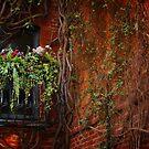 Rear Window by Barbara  Brown