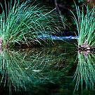 reed reflections by Clare Colins