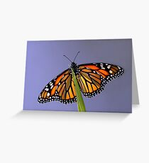Ready for take off..... Greeting Card