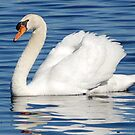 swan by paintin4him