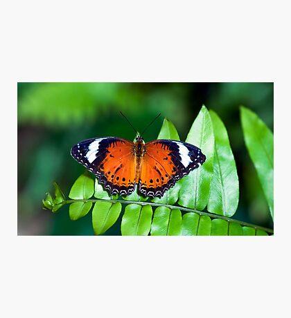 Orange Lacewing Photographic Print
