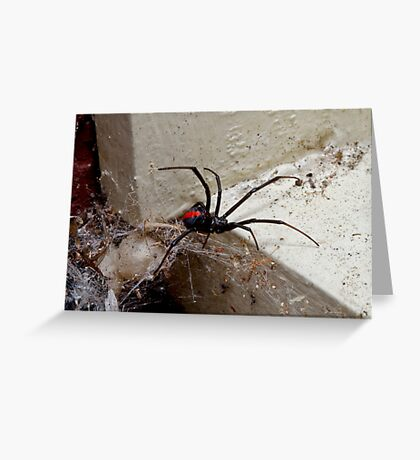 Redback Spider (Latrodectus hasselti) Greeting Card
