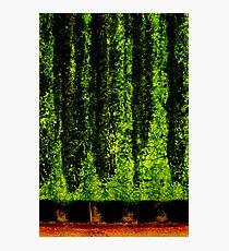 Screen Trees Photographic Print