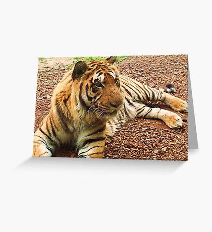 Resting Tiger Greeting Card