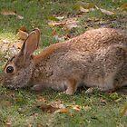 Cute Bunny by Zina Stromberg