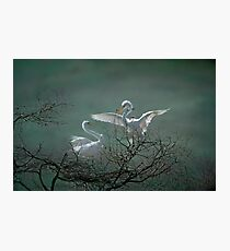 Avery Island Egrets--Nest Building Time  Photographic Print
