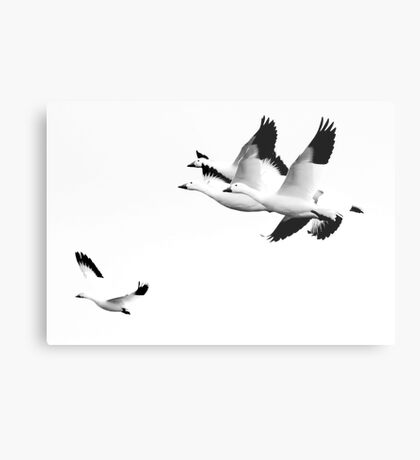 How It Feels To Be Free Metal Print