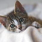 Look into my eyes!!! by Steve Randall