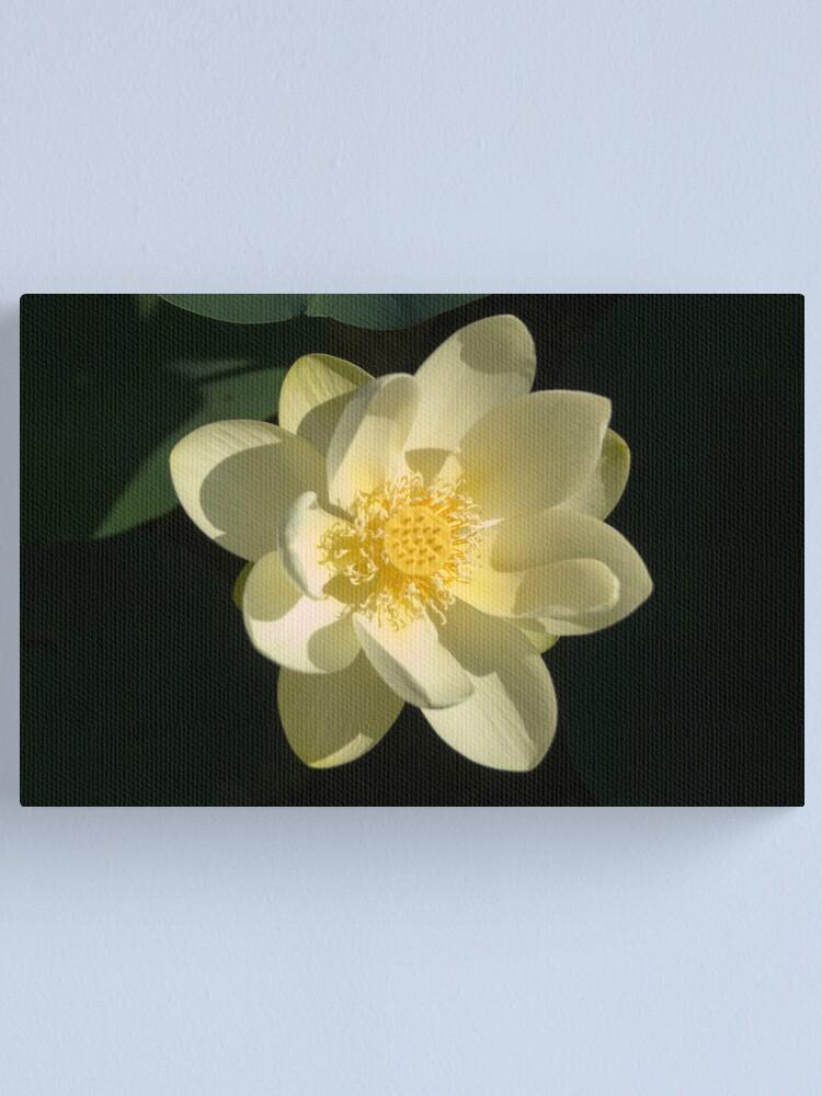 Alternate view of River Lotus Flower Canvas Print