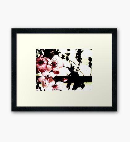 Blossoms and Shadows II Framed Print