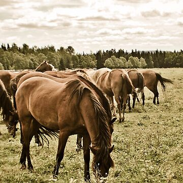The Horses by AlexGoulet