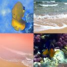 Colorful Photo Collage With Seashore And Sealife by hurmerinta