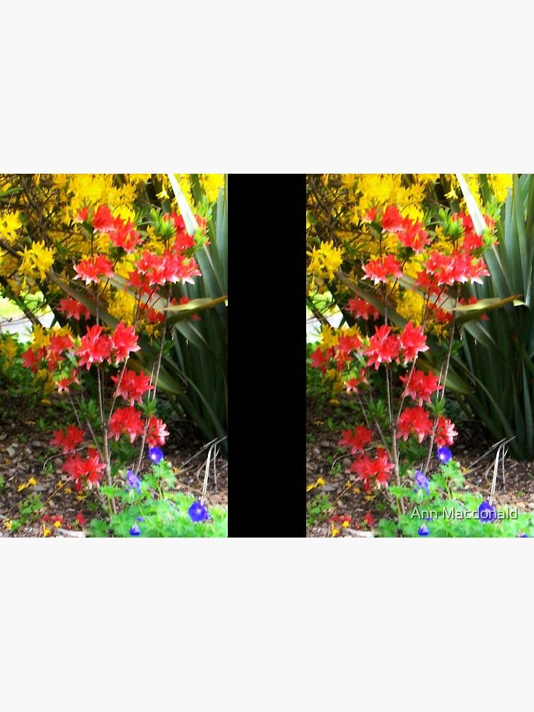 colours von macdonald15