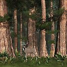 Sequoia Buck by Walter Colvin