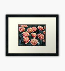 Frilled Tulips - Keukenhof Gardens, Holland Framed Print