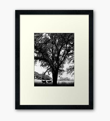 Country Life - Uralla, Rural NSW, Australia Framed Print