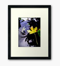 Leaves, Water, Reflection Framed Print