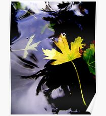 Leaves, Water, Reflection Poster
