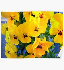 Pansies in a Bag Poster