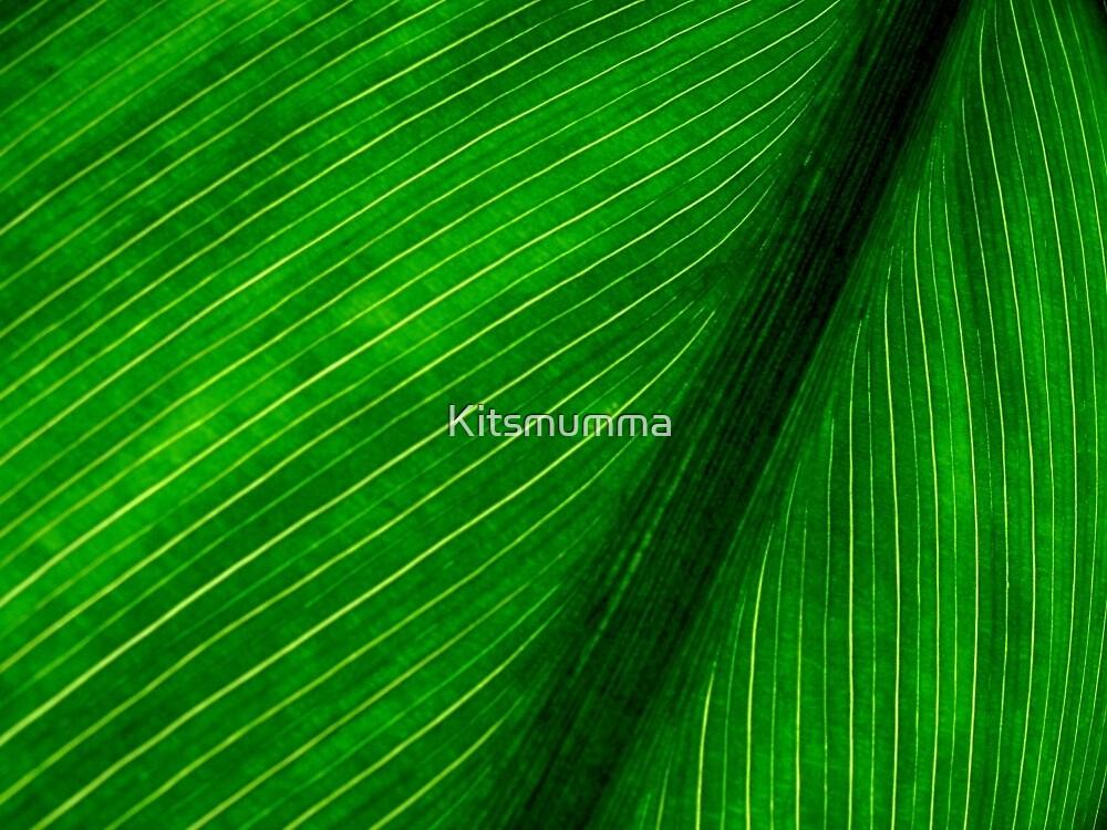 Nature's Pin Stripe by Kitsmumma