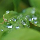 Droplets Of Green And Silver by MissyD