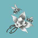 honey bees on wild aquilegia flowers on teal background by EllenLambrichts