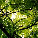 Go Green - Calendar by Kitsmumma