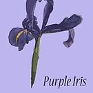 Purple Iris, February 2019 by MotiBlack