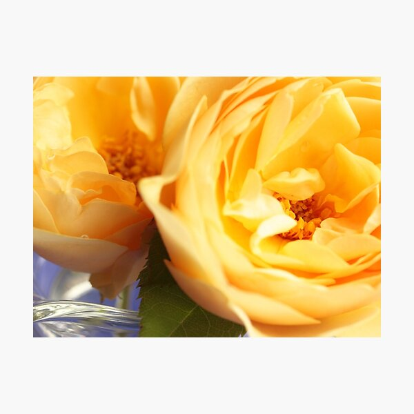 Sunshine and Roses Photographic Print