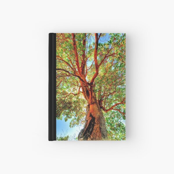 Shimmering Arbutus Hardcover Journal