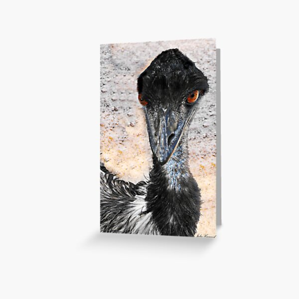 Emu, Dromaius novaehollandiae, in Australia Greeting Card