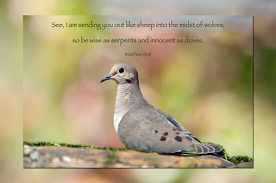 Quot Be Wise As Serpents And Innocent As Doves Quot Posters