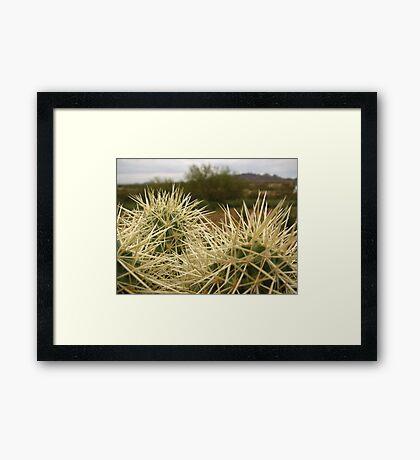 Sonoran Scenery Series ~ 5 ~ Framed Print