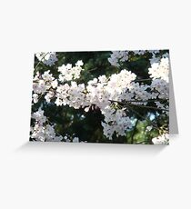 Prunus Greeting Card