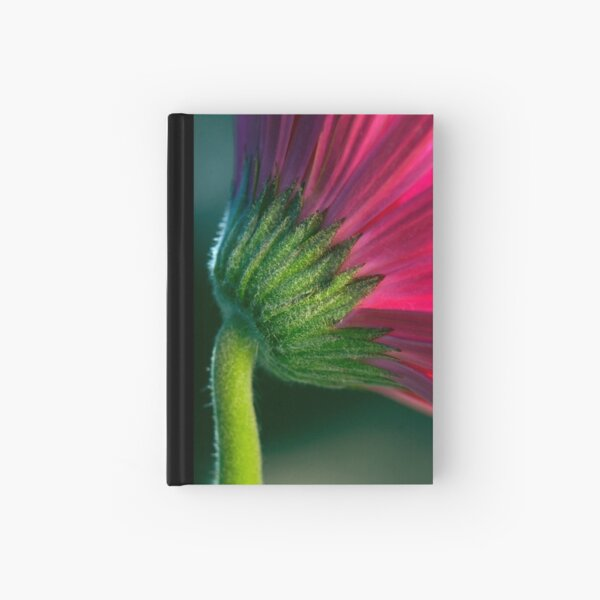 Natural Curve Hardcover Journal