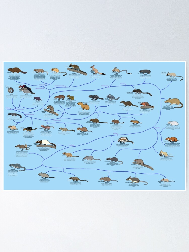 Alternate view of Guide to Rodent Phylogeny Poster