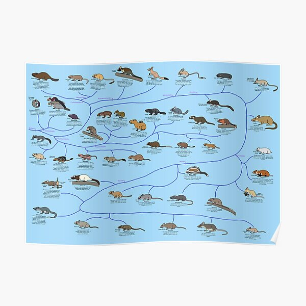 Guide to Rodent Phylogeny Poster