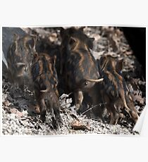wild boar baby behinds Poster