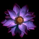 Purple Lotus Flower by Margaret Dill