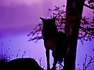 The Wolf by Ryan Davison Crisp