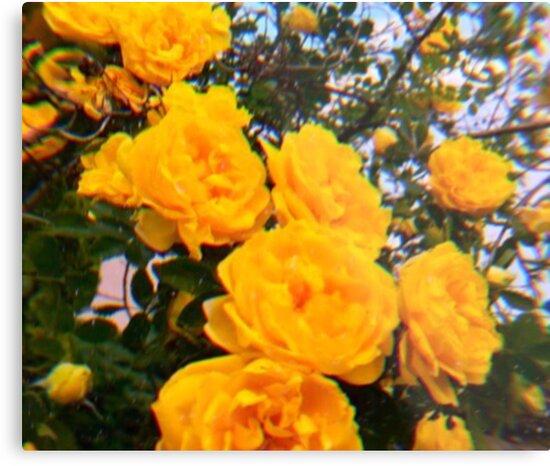 Yellow Flower Aesthetic Metal Print By Mishajenkin Redbubble