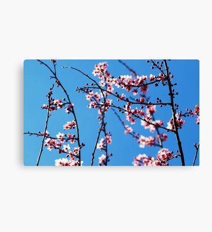 Ahh... Spring! Canvas Print