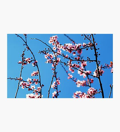 Ahh... Spring! Photographic Print